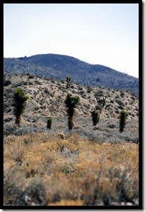 Kaktuslandschaft